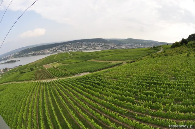 Rudesheim, vineyards, Germany, wine, Rhineland, riesling