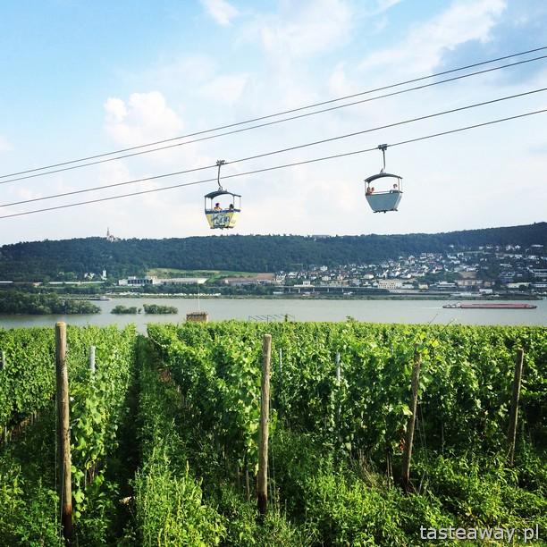 Rhineland, Rudesheim, vineyards