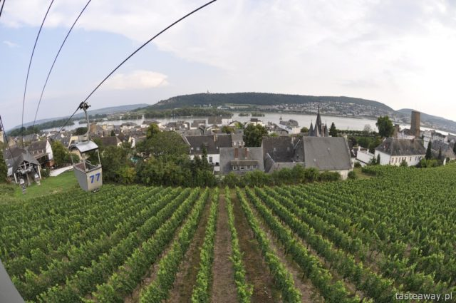 Rudesheim, Rhineland, vineyards, Rhine,