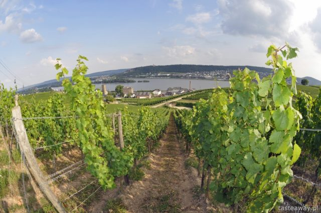 Rudesheim, Mozelle valley, Rhineland, Rhine, Germany, vineyards, wine