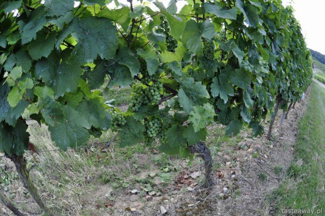 Rudesheim, wino, riesling, Nadrenia, Dolina Renu, Winorośle