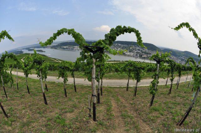Rudesheim, wino, riesling, winorośle, Dolina Renu