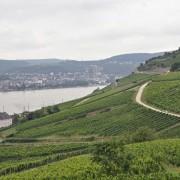 Dolina Renu, wino, riesling