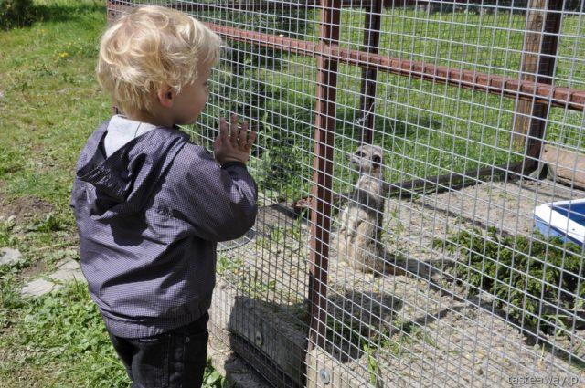 Bieszczady, mini zoo Liszna, Magiczne Bieszczady, atrakcje dla dzieci w Bieszczadach