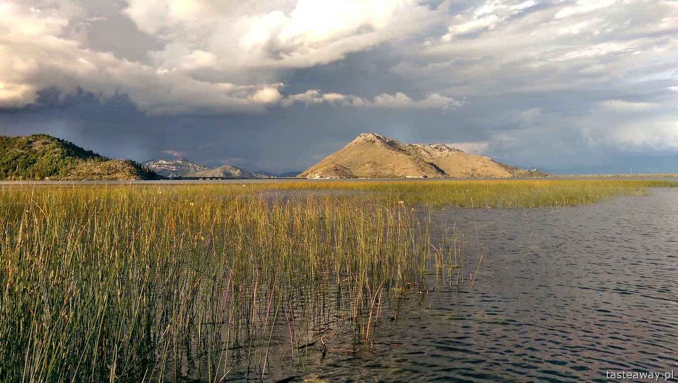 Jezioro Szkoderskie, Virpazar,  Czarnogóra, co zobaczyć w Czarnogórze