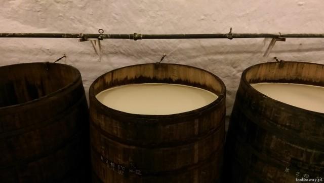 Pilsner Urquell, Pilzno, piwo, browar, festiwal piwa w Pilźnie