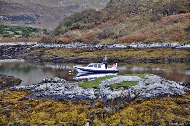 foki, rejs, Szkocja, Kylesku, północna Szkocja, Ullapool