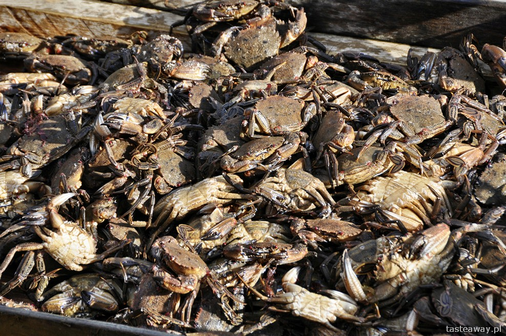 velvet crabs, Portree, Isle of Skye, Szkocja, owoce morza