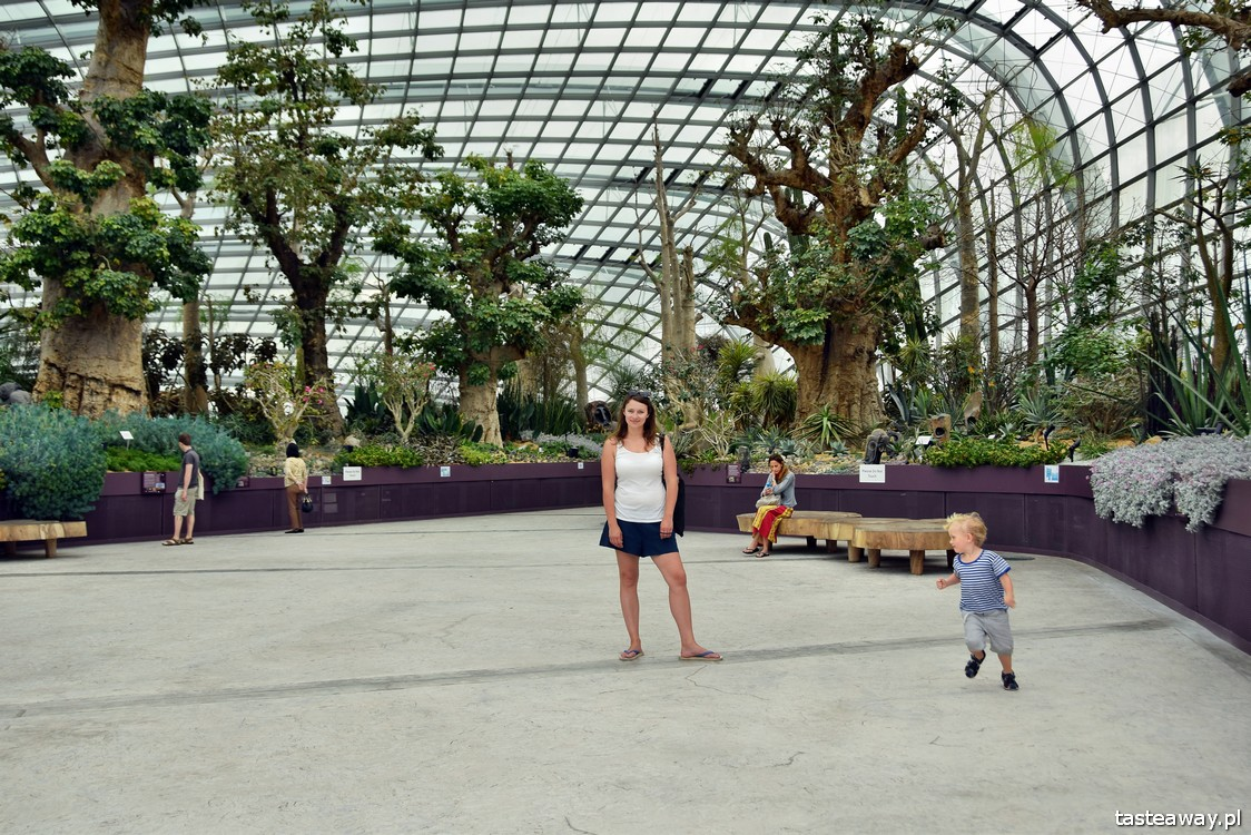 Singapur, Gardens By the Bay, Flower Dome, baobaby
