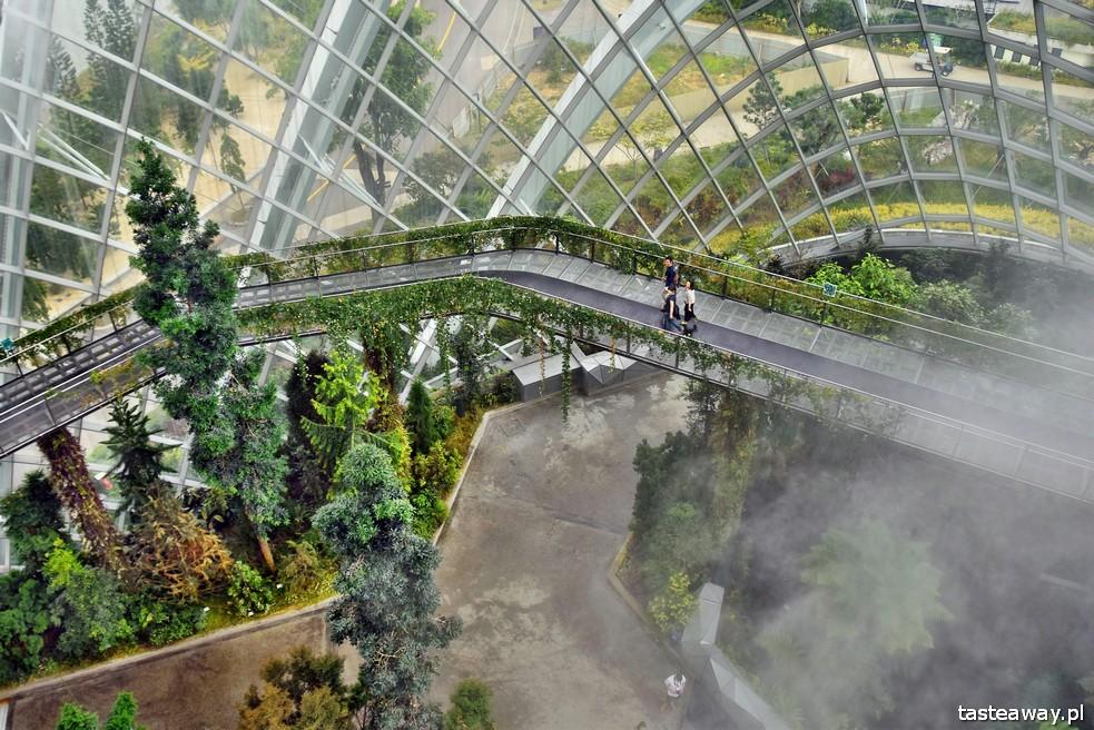 Gardens By the Bay, Singapur, co robić w Singapurze, Singapur z dzieckiem, Cloud Forest