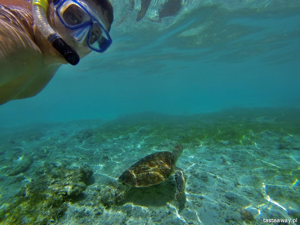 Azja, snurkowanie z żółwiami, archipelag Gili, Indonezja