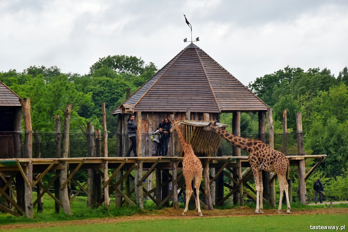 zoo w La Cerza, Normandia, Francja, co zobaczyć w Normandii