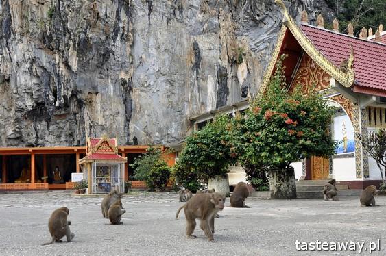 Tajlandia, co zobaczyć w Tajlandii, Chiang Rai, pólnoc Tajlandii, co zobaczyć na północy Tajlandii, Monkey Temple