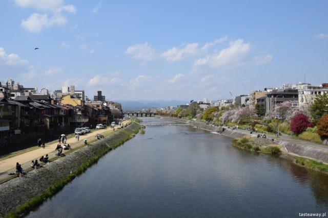 Kioto, Japonia, co zobaczyć w Japonii, co zobaczyć w Kioto, kwitnące wiśnie, Sakura, Kamo, Kamo-gawa