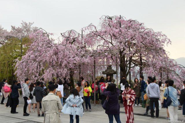 Kioto, Japonia, co zobaczyć w Japonii, co zobaczyć w Kioto, Kiyomizu-dera