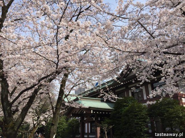 Tokio, co zobaczyć w Japonii, kwitnące wiśnie, Sakura, Kraj kwitnącej Wiśni, Ichigaya, Chiyoda
