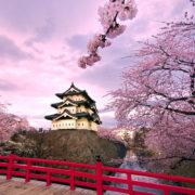 Japonia, przygotowania do wyjazdu, kiedy do Japonii, kwitnące wiśnie