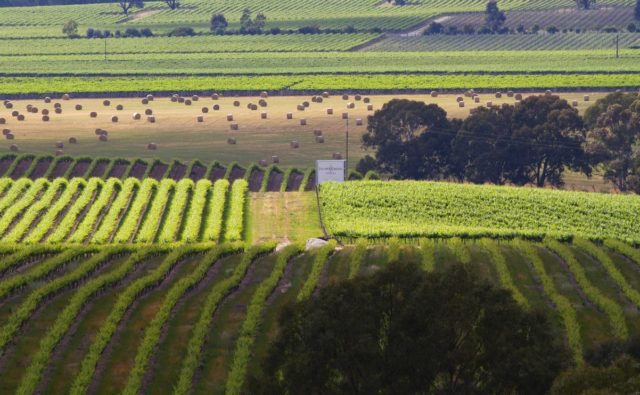 Barossa Valley, Australia, winnica, Jacob's Creek, blogowanie,