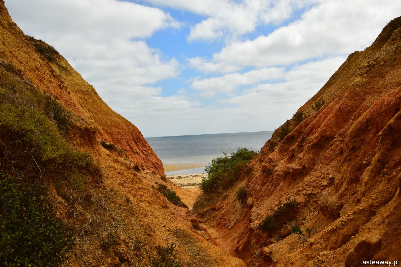 Australia, co zobaczyć w Australii, Kangaroo Island, kangury, co zobaczyć w okolicach Adelajdy, Red Banks, co zobaczyć na Kangaroo Island