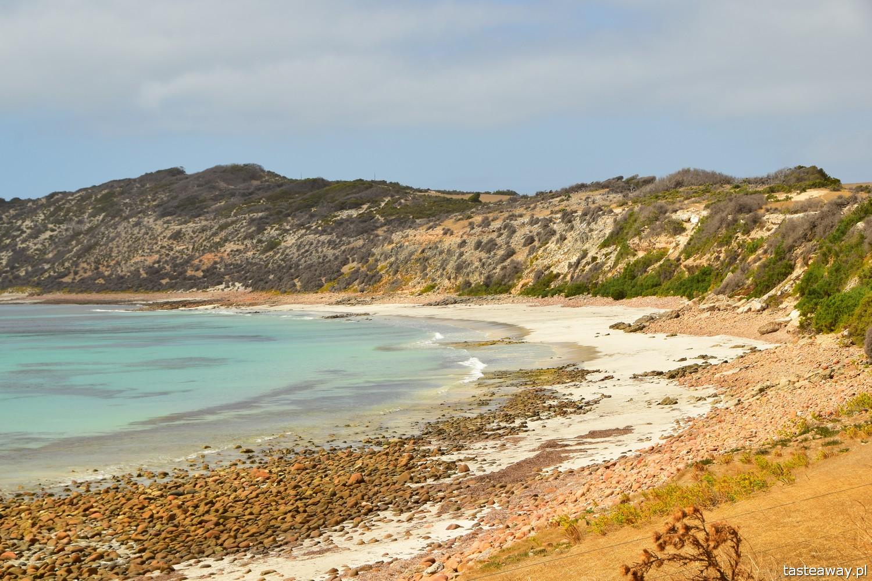 Australia, co zobaczyć w Australii, Kangaroo Island, kangury, co zobaczyć w okolicach Adelajdy, Boxing bay, co zobaczyć na Kangaroo Island