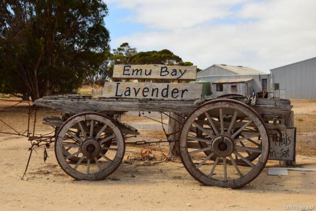 Australia, co zobaczyć w Australii, Kangaroo Island, kangury, co zobaczyć w okolicach Adelajdy, Emu Lavender Bay