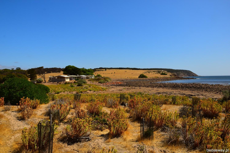 Australia, co zobaczyć w Australii, co zobaczyć w okolicach Adelajdy, Kangaroo Island, co zobaczyć na Kangaroo Island, Stokes Bay