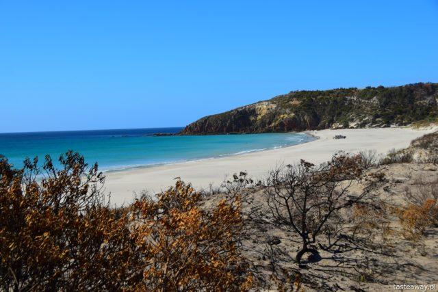Australia, co zobaczyć w Australii, Kangaroo Island, kangury, co zobaczyć w okolicach Adelajdy, Snelling Beach