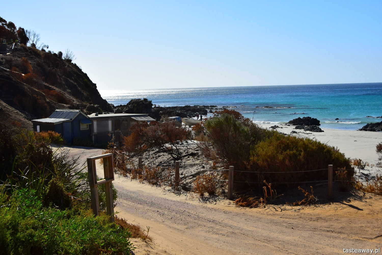 Australia, co zobaczyć w Australii, co zobaczyć w okolicach Adelajdy, Kangaroo Island, co zobaczyć na Kangaroo Island, Stokes Bay, Kangury, Snelling Beach