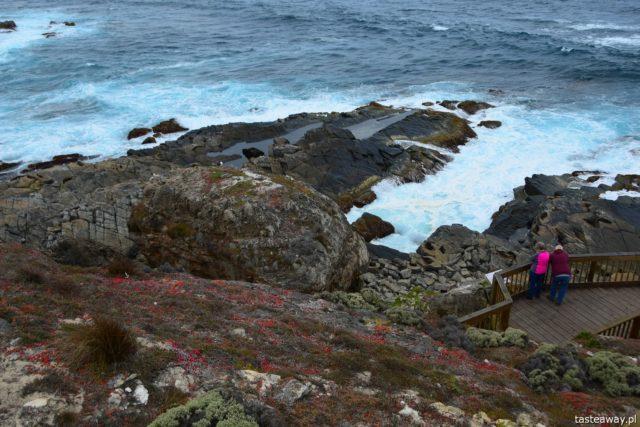Australia, co zobaczyć w Australii, co zobaczyć w okolicach Adelajdy, Kangaroo Island, co zobaczyć na Kangaroo Island, Stokes Bay, Kangury, FLinders Chase, Admirals Arch