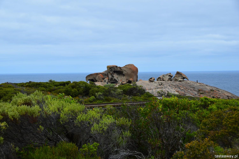 Australia, co zobaczyć w Australii, co zobaczyć w okolicach Adelajdy, Kangaroo Island, co zobaczyć na Kangaroo Island, Stokes Bay, Kangury, FLinders Chase, Remarkable Rocks
