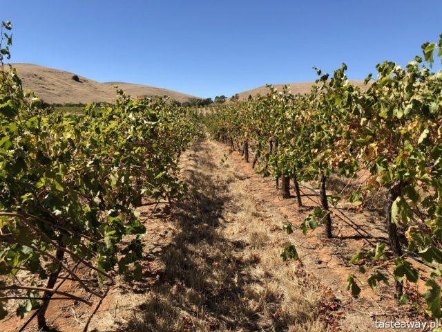 Australia, co zobaczyć w Australii, australijskie wino, Barossa Valley,