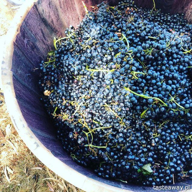 Australia, co zobaczyć w Australii, australijskie wino, Barossa Valley, wina Jacob's Creek