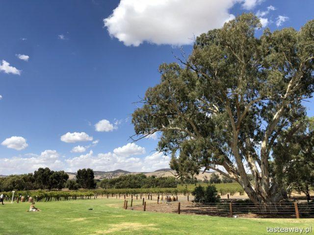 Australia, co zobaczyć w Australii, australijskie wino, Barossa Valley, wina Jacob's Creek, wino, australijski styl życia, pogoda w Australii, jesień