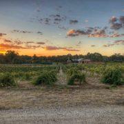 Australia, co zobaczyć w Australii, australijskie wino, Barossa Valley, wina Jacob's Creek, wino, białe wino