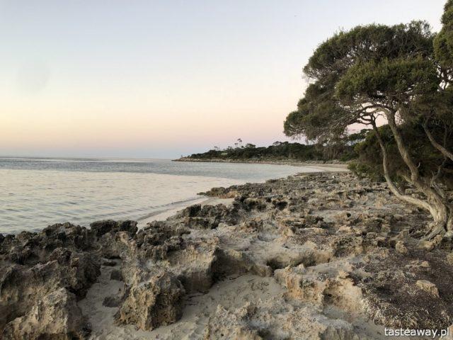 Australia, co zobaczyć w Australii, co zobaczyć w okolicach Adelajdy, Kangaroo Island, co zobaczyć na Kangaroo Island, Penneshaw, Baudin Beach