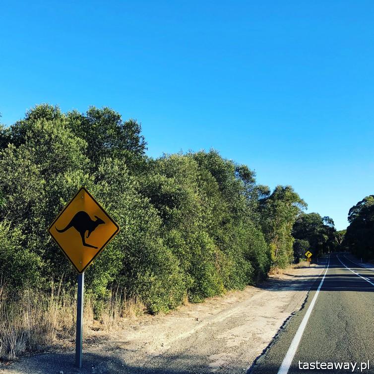 Australia, co zobaczyć w Australii, co zobaczyć w okolicach Adelajdy, Kangaroo Island, co zobaczyć na Kangaroo Island, Cape Willoughby,, Kangury