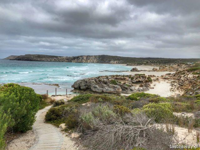 Australia, co zobaczyć w Australii, Kangaroo Island, kangury, co zobaczyć w okolicach Adelajdy, Pennington Bay, plaże Kangaroo Island