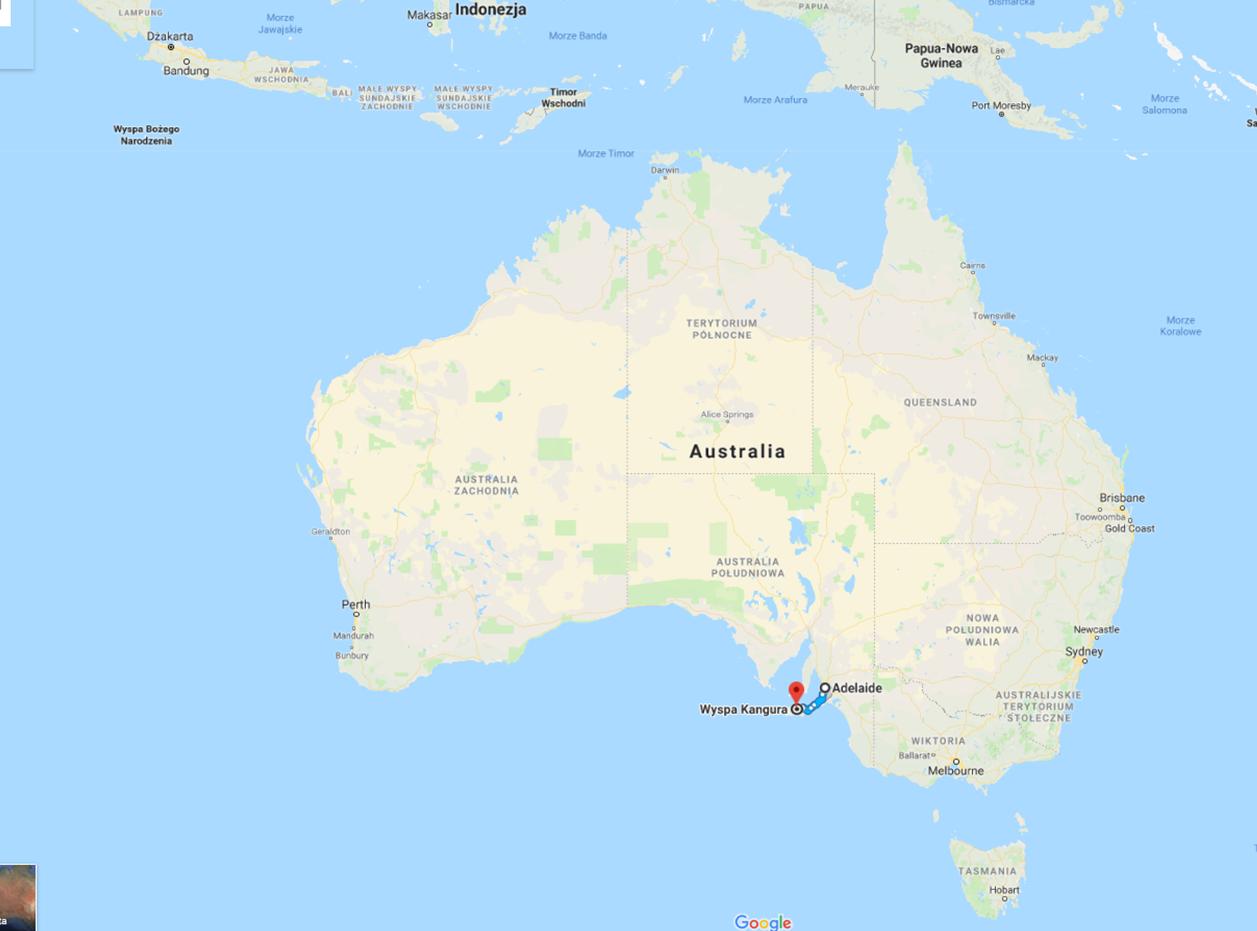 Australia, co zobaczyć w Australii, Kangaroo Island, kangury, co zobaczyć w okolicach Adelajdy, Kangaroo Island położenie