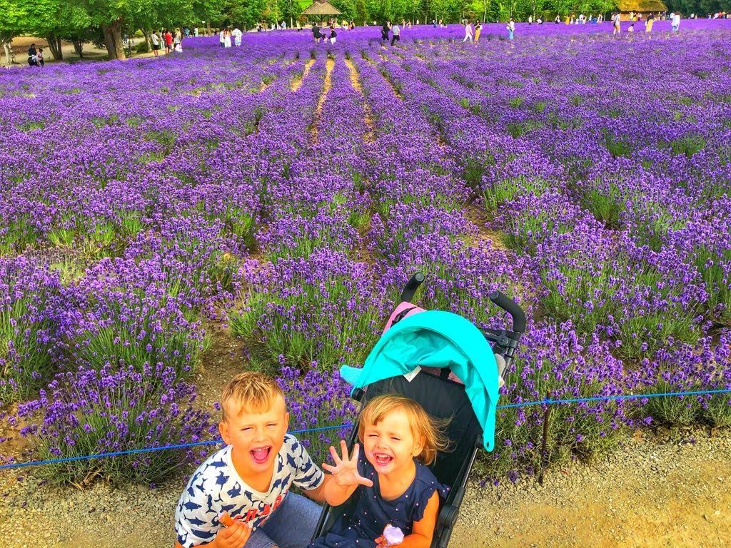 Farm Tomita Lavender Farm
