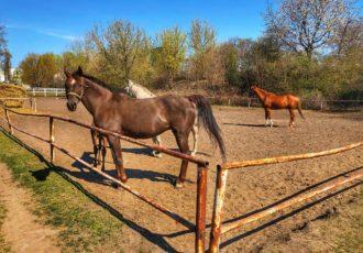 konie w Warszawie