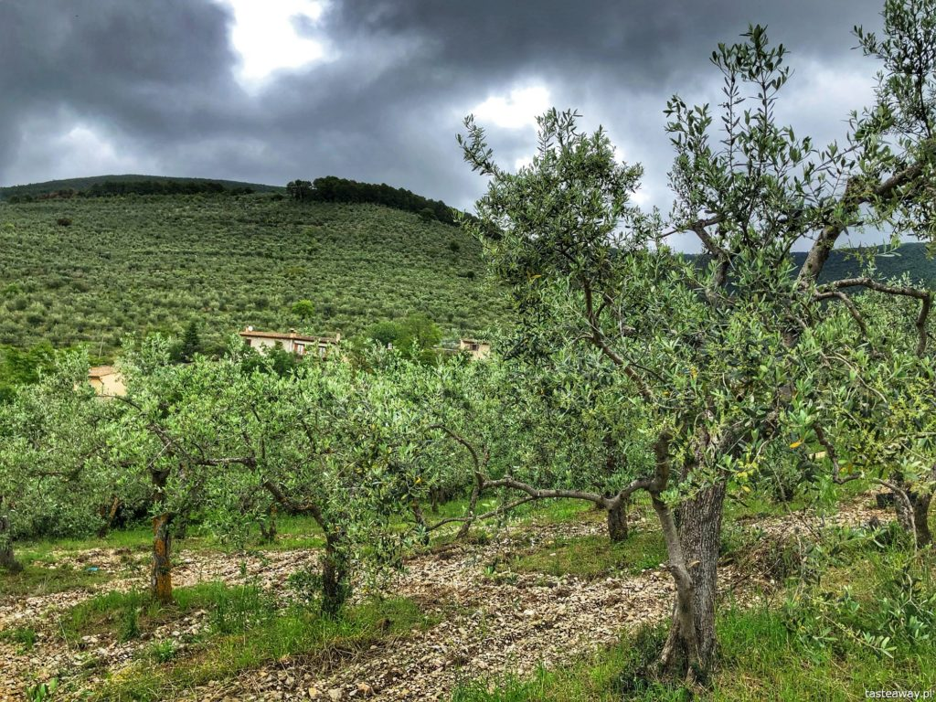 gaje-oliwne-umbria-4