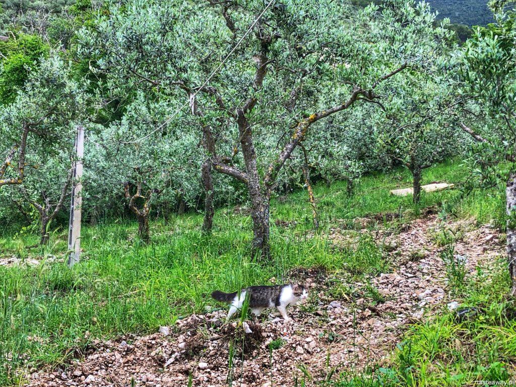 gaje-oliwne-umbria-5