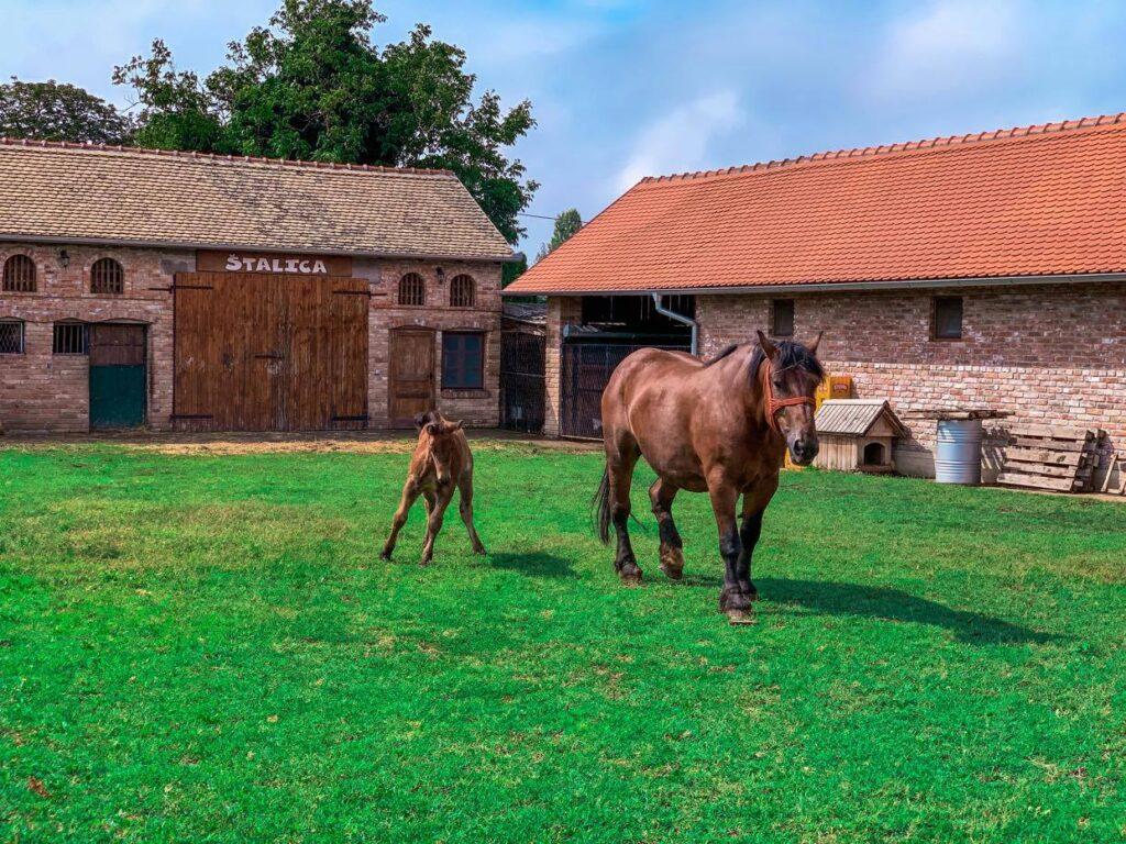 Chorwacja_Ivica i Marica_konie