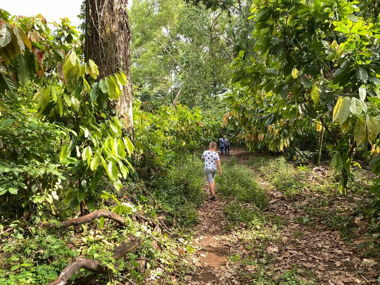 zieleń plantacji