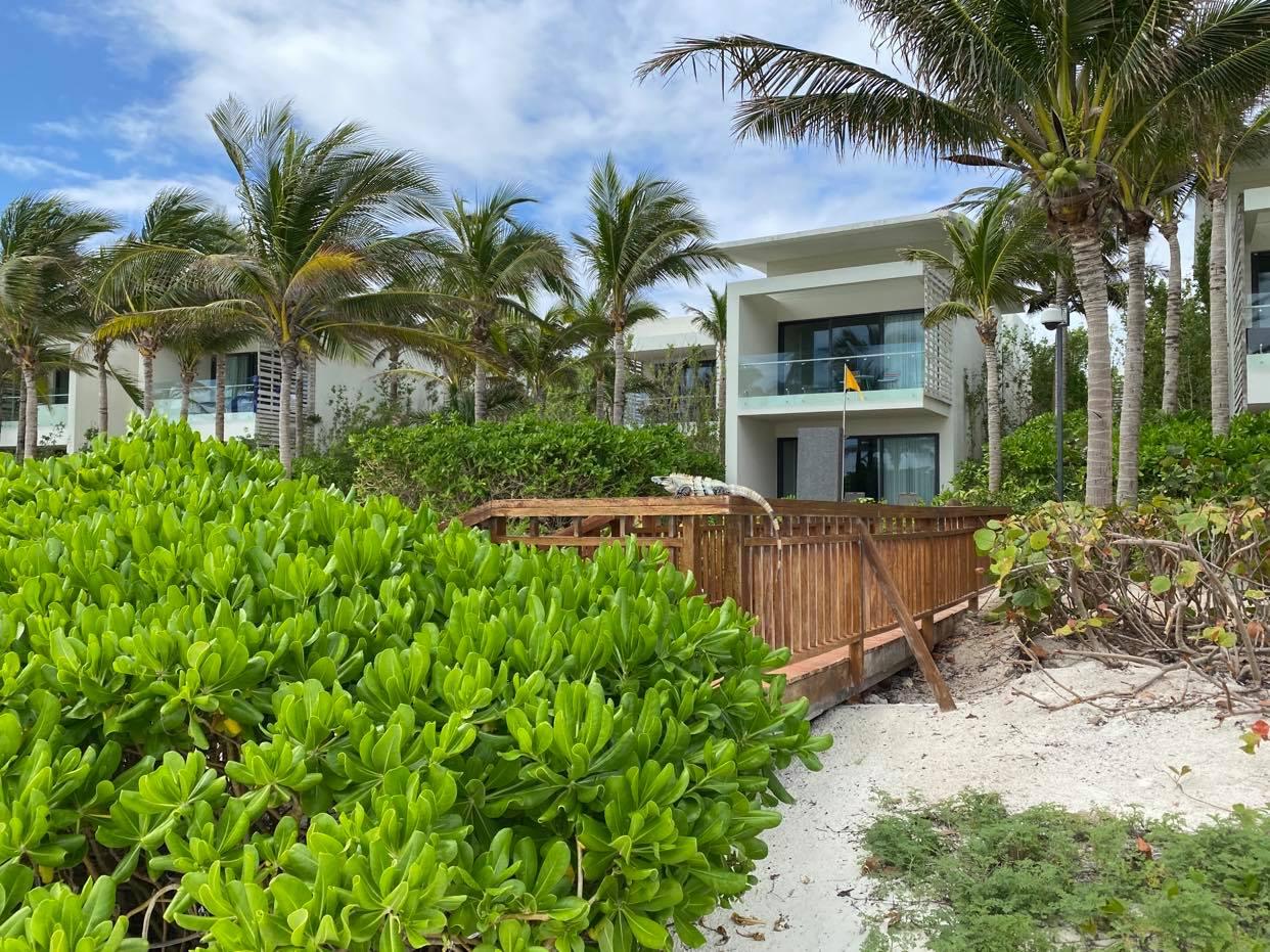 Domki przy plaży i iguana