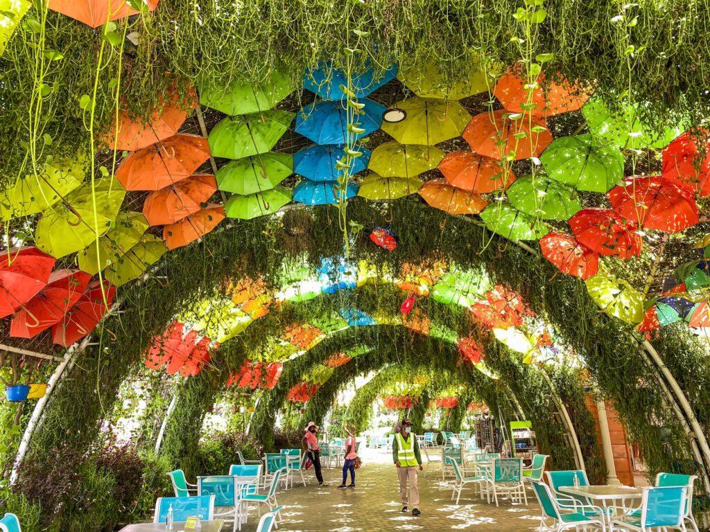 Dubai Miracle Garden_8