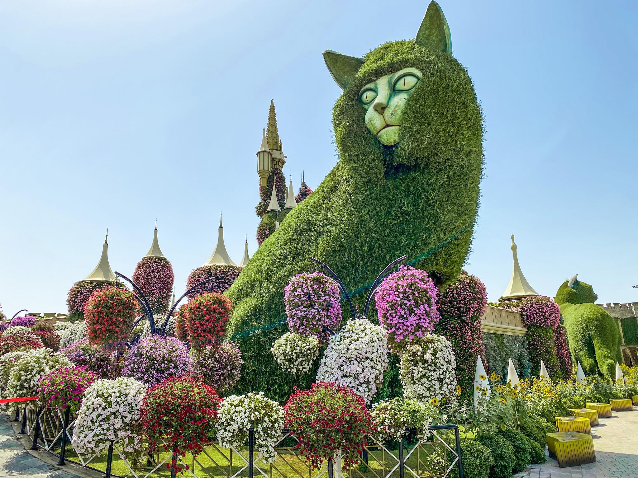 Dubai Miracle Garden_kot